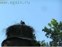 Зайцева Гора (9-12 июня 2007)